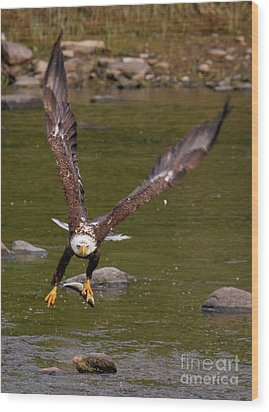 Wood Print featuring the photograph Eagle Fying With Fish by Debbie Stahre