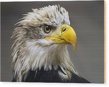 Eagle Wood Print by Harry Spitz