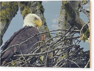 Wood Print featuring the photograph Eagle In Nest by Rod Wiens