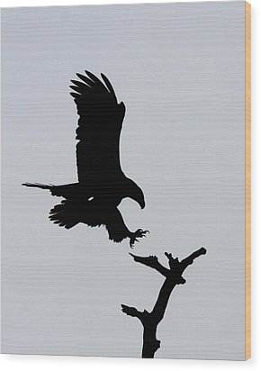 Wood Print featuring the photograph Eagle Landing by Phil Stone