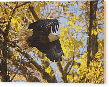 Eagle Launch Wood Print by Angel Cher