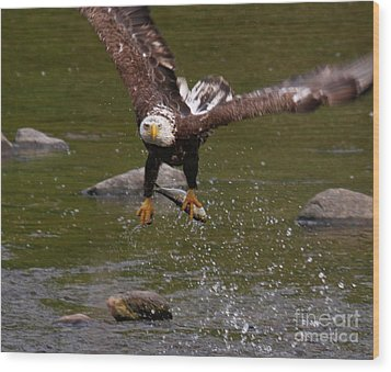 Wood Print featuring the photograph Eagle Over Seal Rock by Debbie Stahre