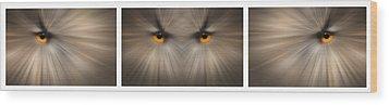 Eagle Owl Eye Triptych Wood Print