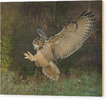 Eagle-owl Wings Back Wood Print by CR Courson