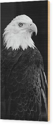 Eagle Portrait Special  Wood Print by Coby Cooper