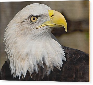 Eagle Power Wood Print by William Jobes