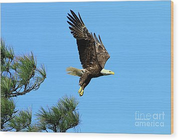 Wood Print featuring the photograph Eagle Series 1 2017 by Deborah Benoit