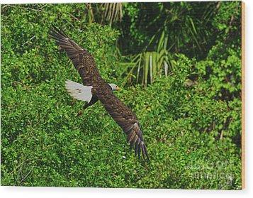 Wood Print featuring the photograph Eagle Series Flight by Deborah Benoit