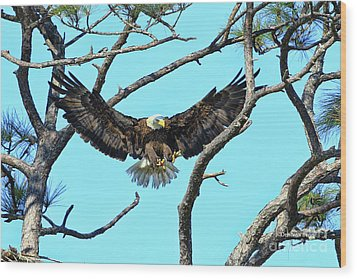 Wood Print featuring the photograph Eagle Series Wings by Deborah Benoit