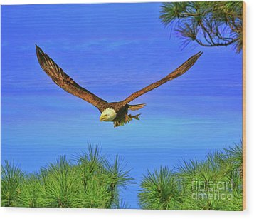 Wood Print featuring the photograph Eagle Series Through The Trees by Deborah Benoit