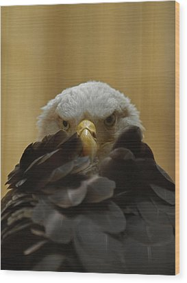 Eagle Thinking Wood Print by Peter Gray