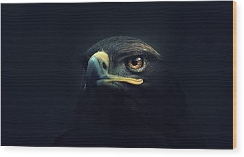 Eagle Wood Print by Zoltan Toth
