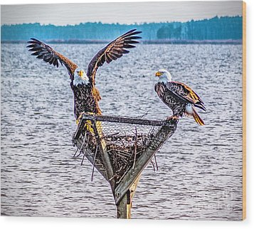 Wood Print featuring the photograph Eagles In Blackwater Refuge by Nick Zelinsky