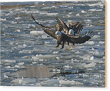 Eagles On Ice Wood Print
