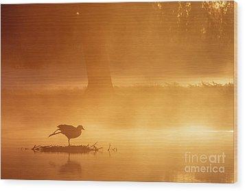 Earasian Coot At Sunrise Wood Print