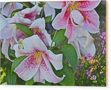 Early August Tumble Of Lilies Wood Print