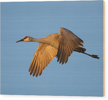 Wood Print featuring the photograph Early Morning Flight by Gerry Sibell