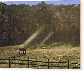 Wood Print featuring the photograph Early Morning Grazing by Diane Merkle