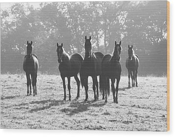 Early Morning Horses Wood Print by Hazy Apple