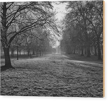Early Morning In Hyde Park 16x20 Wood Print