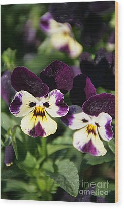 Early Morning Pansies Wood Print by Andrea Jean
