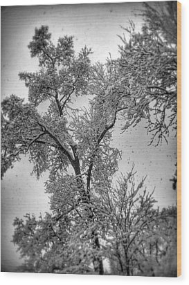 Wood Print featuring the photograph Early Snow by Steven Huszar