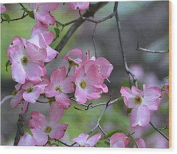 Early Spring Color Wood Print by Kathy Eickenberg