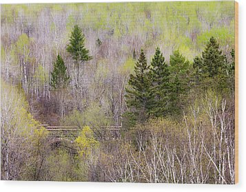 Wood Print featuring the photograph Early Spring Palette by Mary Amerman