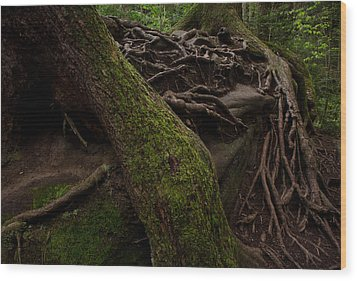 Earth Day 2012 Wood Print by Maria Suhr