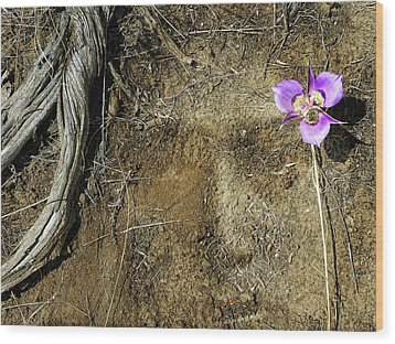 Wood Print featuring the photograph Earth Memories-desert Flower # 1 by Ed Hall