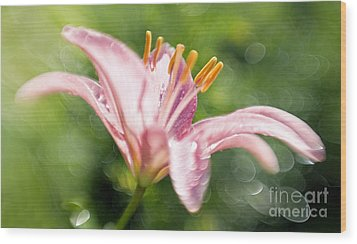 Easter Lily 1 Wood Print by Tony Cordoza