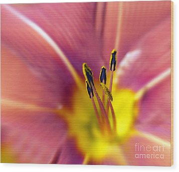 Easter Lily 3 Wood Print by Tony Cordoza