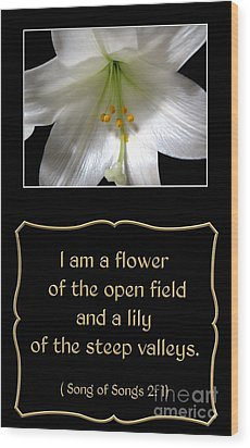 Easter Lily With Song Of Songs Quote Wood Print by Rose Santuci-Sofranko