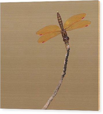 Eastern Amberwing Wood Print