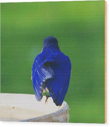 Eastern Bluebird. #birds #birding Wood Print