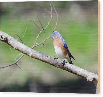 Eastern Bluebird Wood Print by George Randy Bass