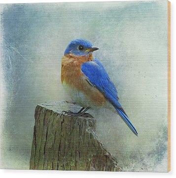 Eastern Bluebird II Wood Print by Sandy Keeton
