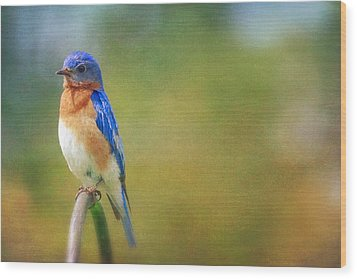 Wood Print featuring the photograph Eastern Bluebird Painted Effect by Heidi Hermes