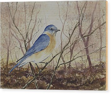 Eastern Bluebird Wood Print by Sam Sidders