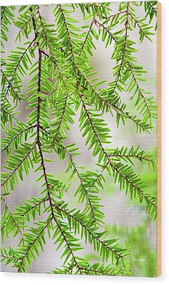 Wood Print featuring the photograph Eastern Hemlock Tree Abstract by Christina Rollo