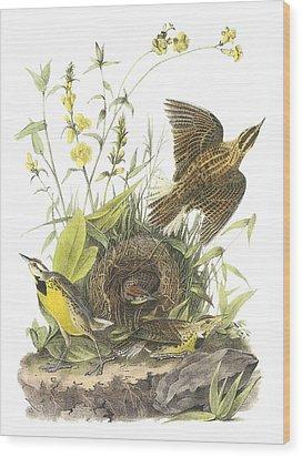 Eastern Meadowlark Wood Print by John James Audubon