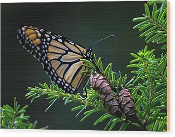 Wood Print featuring the photograph Eastern Monarch by Juergen Roth