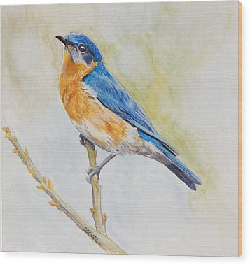 Wood Print featuring the painting Eastern Mountain Bluebird by Robert Decker