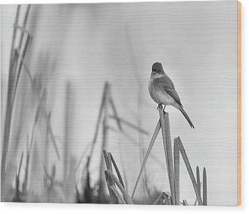 Eastern Phoebe 2017 Wood Print by Thomas Young