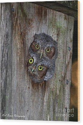 Eastern Screech Owl Chicks Wood Print