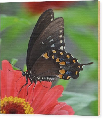Eastern Swallowtail Wood Print by Penni D'Aulerio