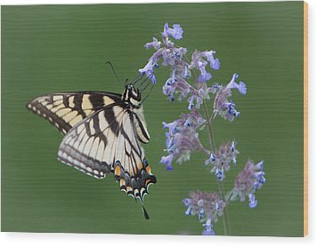 Eastern Tiger Swallowtail Profile Wood Print by Patti Deters