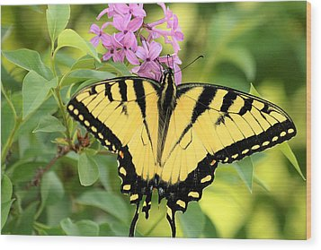 Eastern Tiger Swallowtail Butterfly Wood Print by Sheila Brown