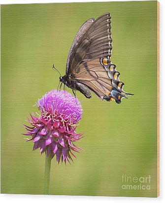 Wood Print featuring the photograph Eastern Tiger Swallowtail Dark Form  by Ricky L Jones