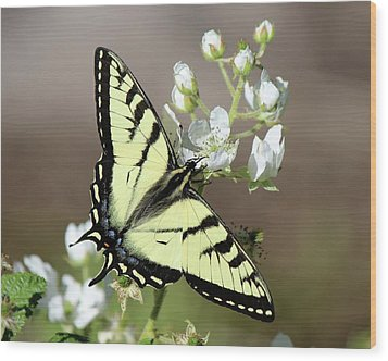 Eastern Tiger Swallowtail Female Wood Print
